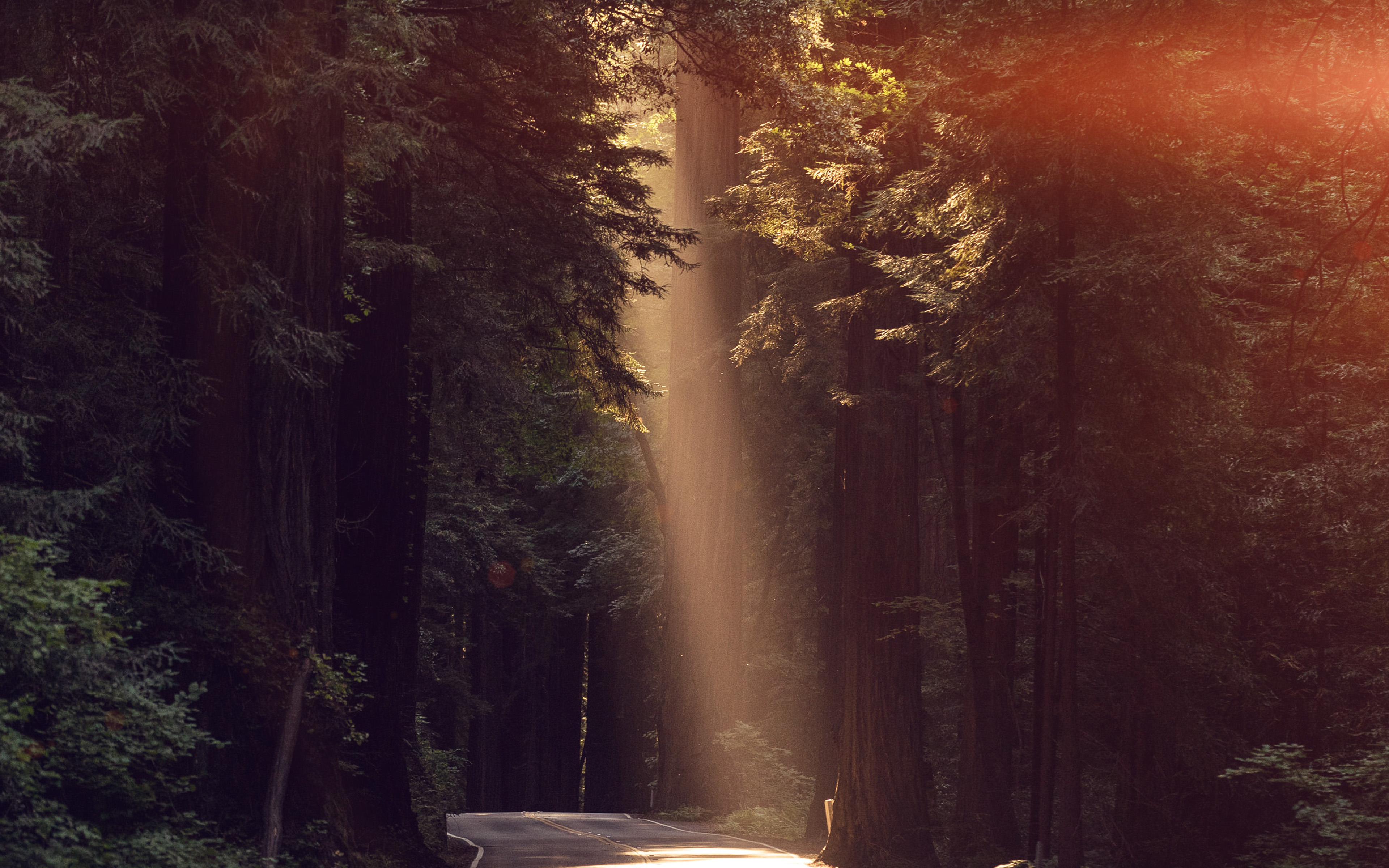 Nh16 Light Road Wood Forest Way Nature Flare Wallpaper