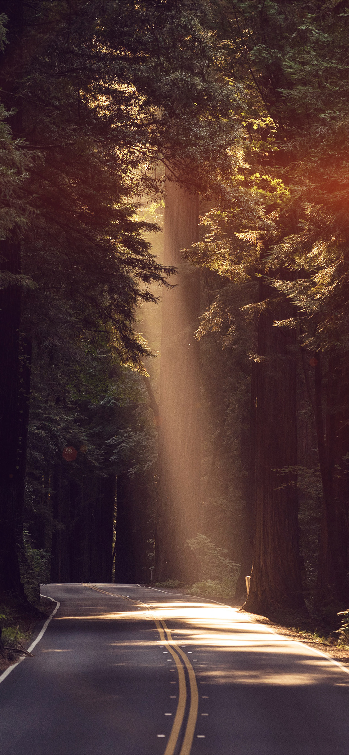 iPhonexpapers.com-Apple-iPhone-wallpaper-nh16-light-road-wood-forest-way-nature-flare