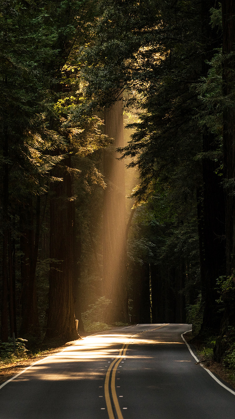 iPhone6papers.co-Apple-iPhone-6-iphone6-plus-wallpaper-nh17-light-road-wood-forest-way-nature-green