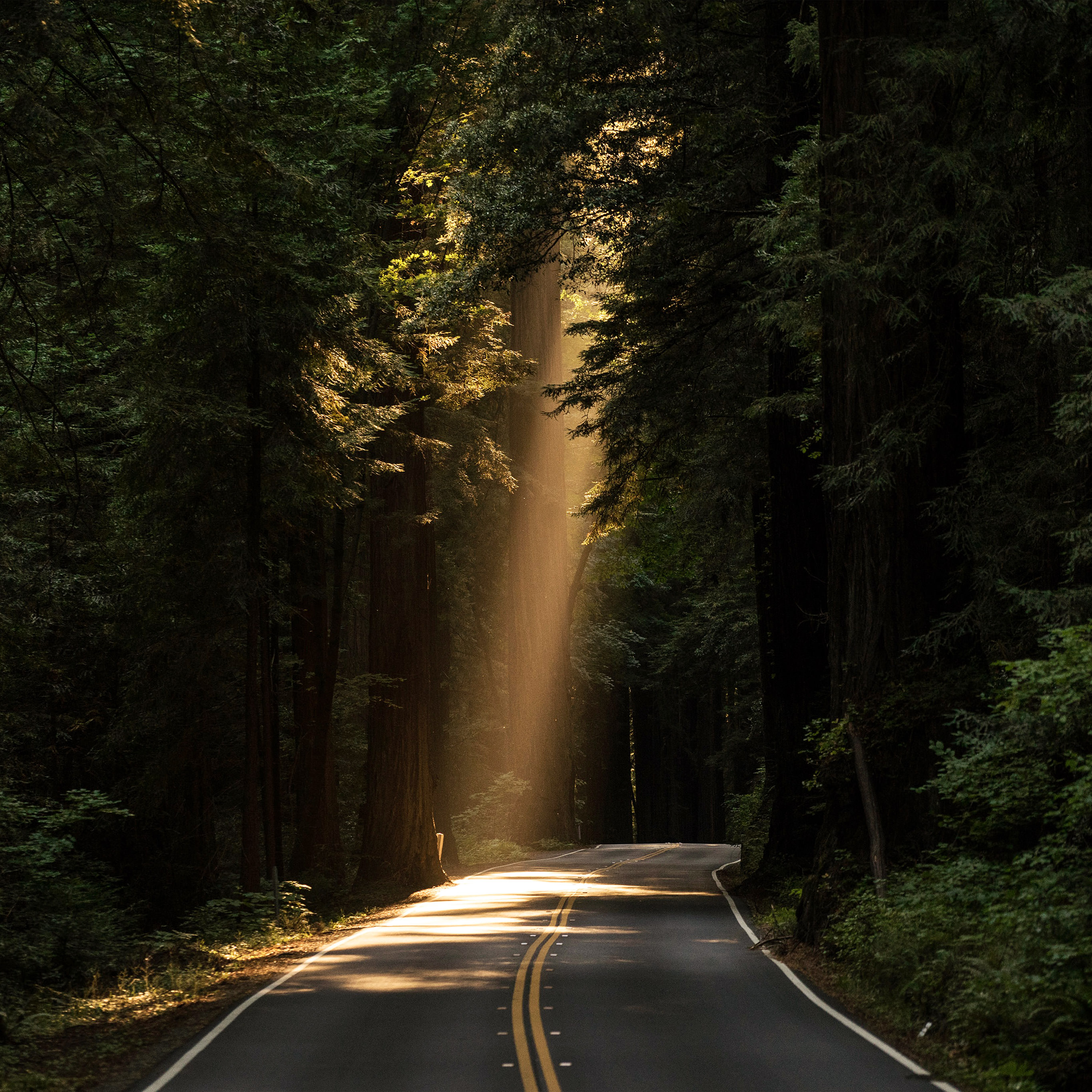 Nh17 Light Road Wood Forest Way Nature Green Wallpaper