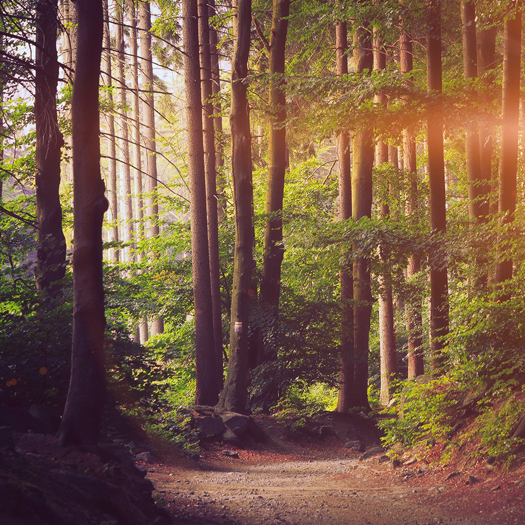 wallpaper-nh30-nature-wood-forest-sunshine-mountain-flare-wallpaper