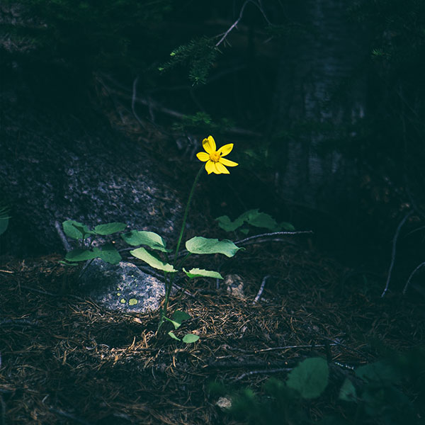 iPapers.co-Apple-iPhone-iPad-Macbook-iMac-wallpaper-nh35-flower-yellow-forest-wood-lonely-dark-nature-wallpaper