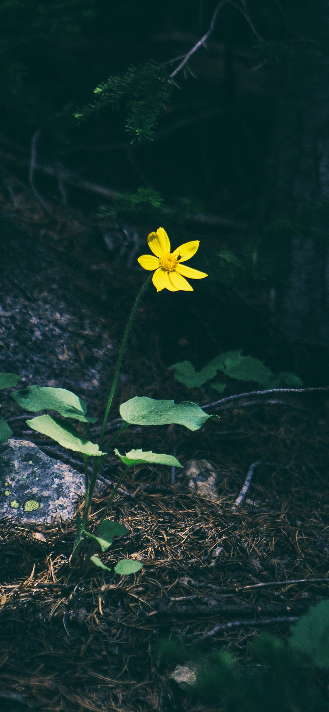 iPhoneXpapers.com-Apple-iPhone-wallpaper-nh35-flower-yellow-forest-wood-lonely-dark-nature