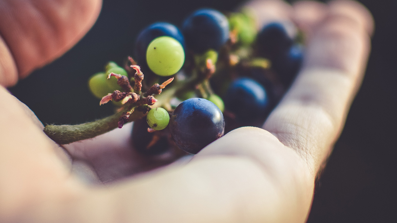 desktop-wallpaper-laptop-mac-macbook-air-nh39-grape-fruit-in-hand-bokeh-art-wallpaper