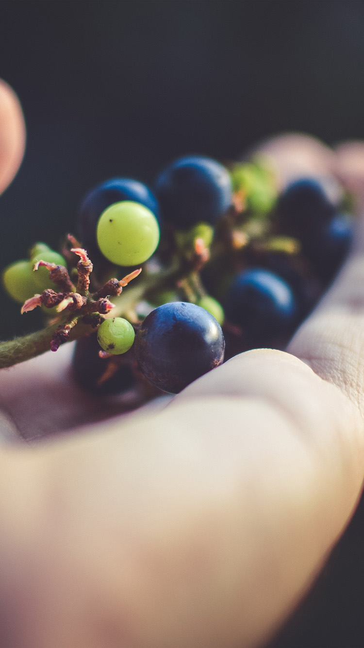 iPhone6papers.co-Apple-iPhone-6-iphone6-plus-wallpaper-nh39-grape-fruit-in-hand-bokeh-art