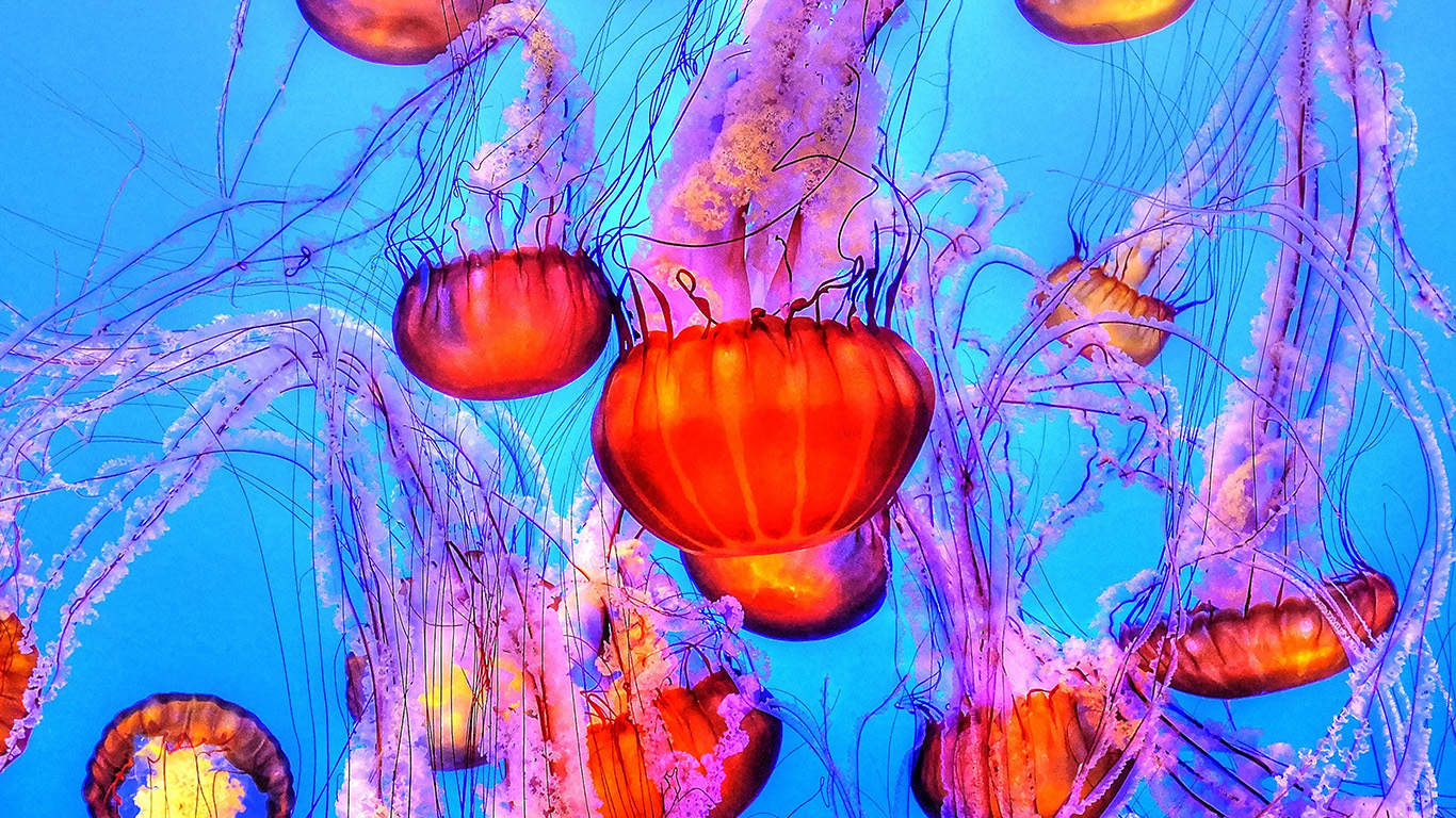 desktop-wallpaper-laptop-mac-macbook-air-nh64-jellyfish-water-ocean-red-blue-wallpaper