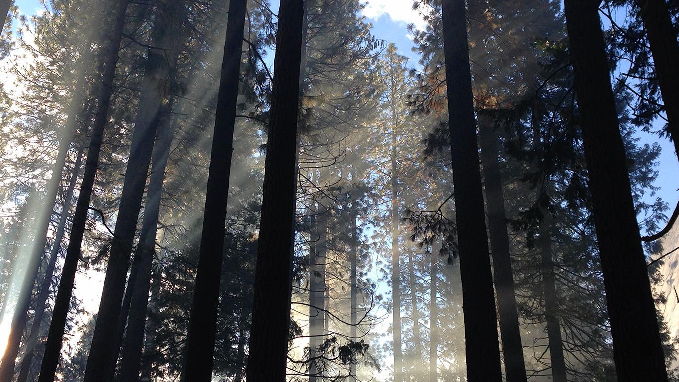 desktop-wallpaper-laptop-mac-macbook-air-nh66-forest-wood-tree-light-summer-nature-wallpaper