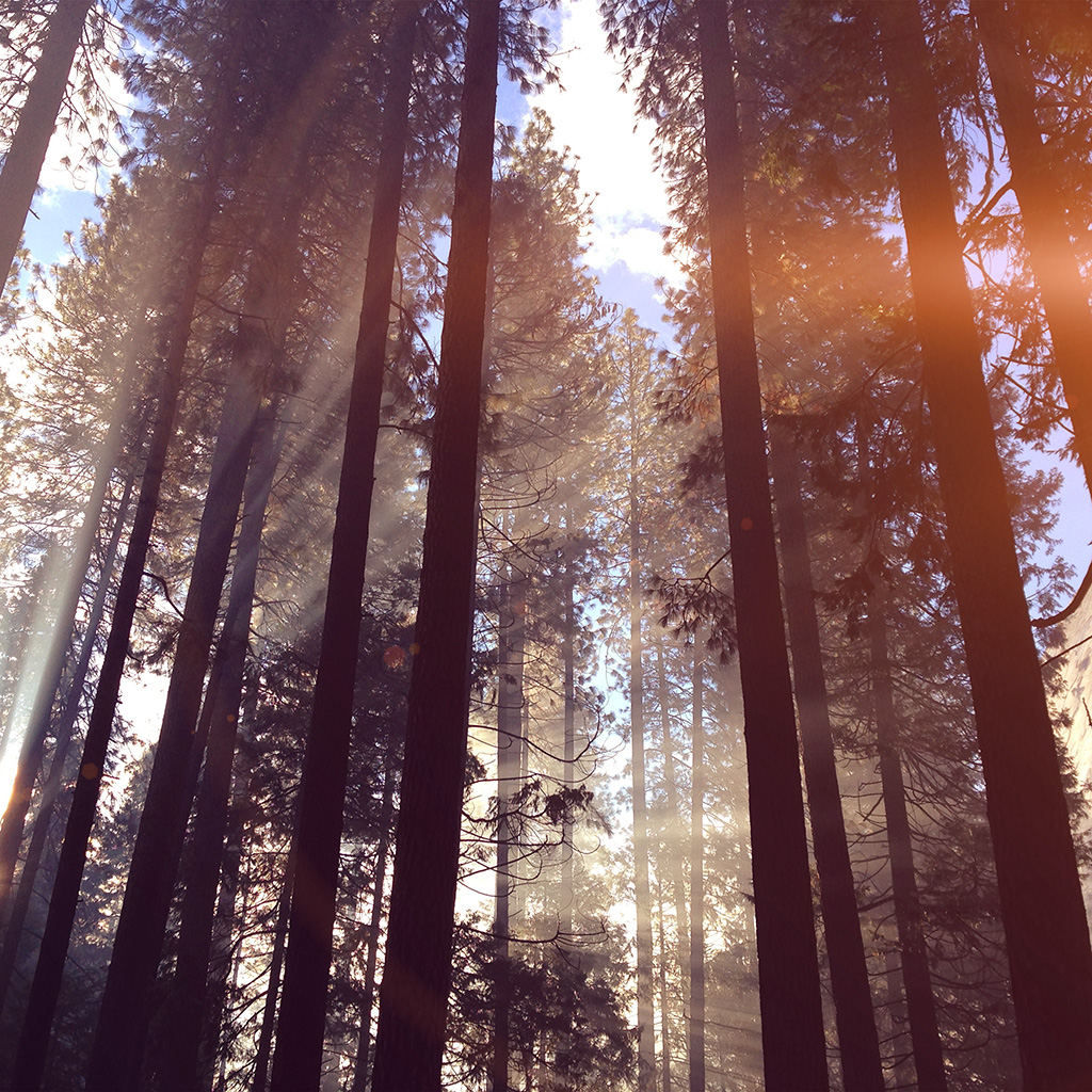 wallpaper-nh67-forest-wood-tree-light-summer-nature-flare-wallpaper