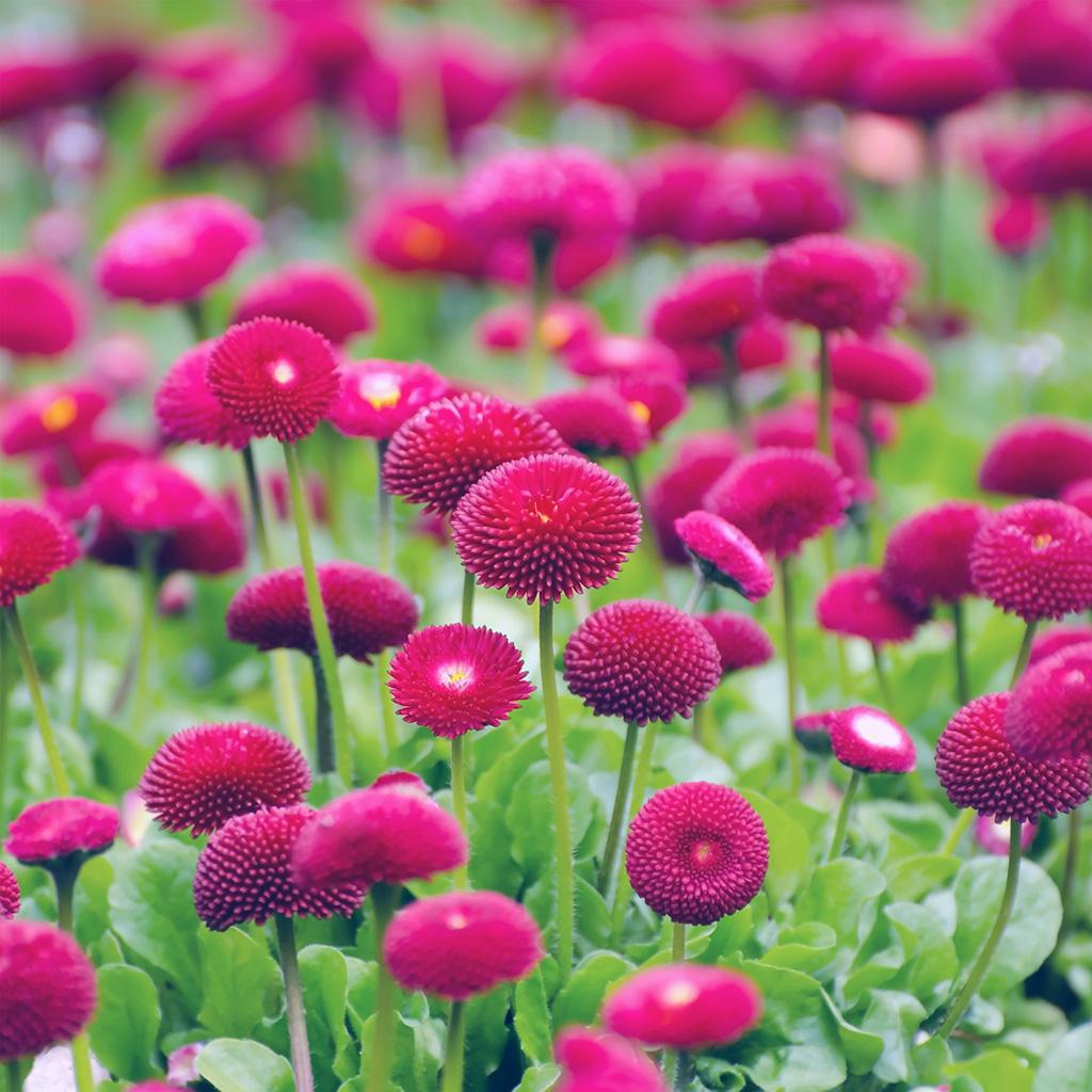 wallpaper-nh69-flower-red-green-spring-bokeh-nature-blue-wallpaper