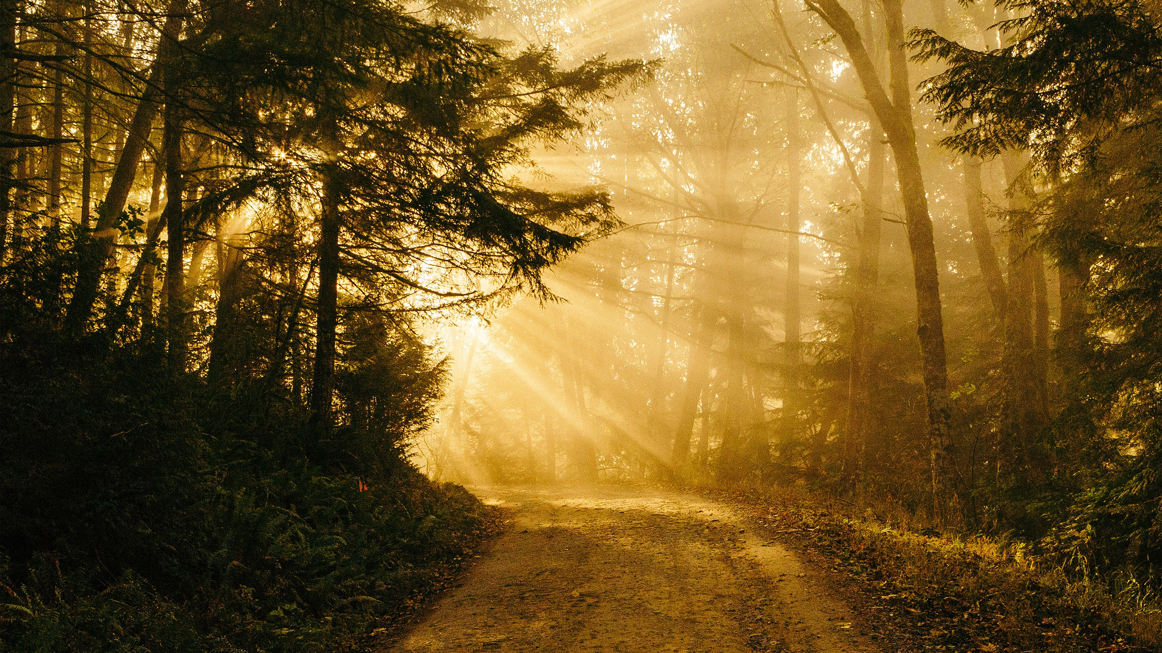 nh73-sunny-road-wood-forest-light-tree-nature-gold-wallpaper