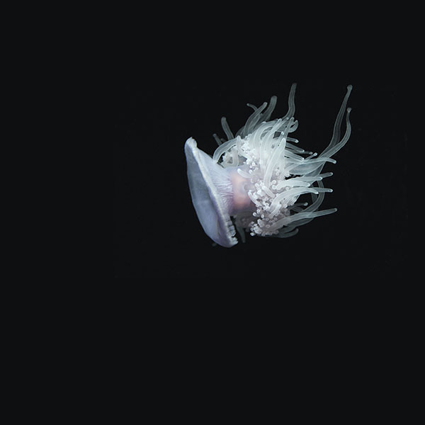 iPapers.co-Apple-iPhone-iPad-Macbook-iMac-wallpaper-nh77-jellyfish-dark-sea-ocean-animal-wallpaper