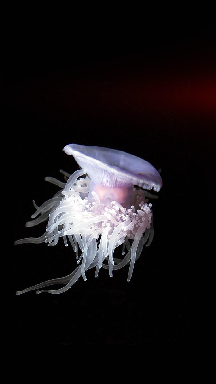 iPhone7papers.com-Apple-iPhone7-iphone7plus-wallpaper-nh78-jellyfish-dark-sea-ocean-animal-flare
