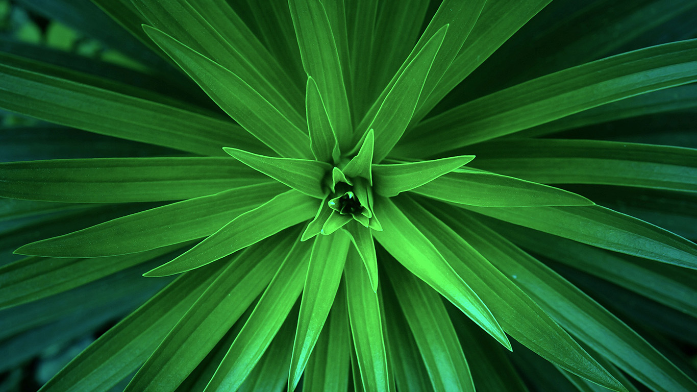 desktop-wallpaper-laptop-mac-macbook-air-nh79-leaf-flower-green-line-nature-wallpaper