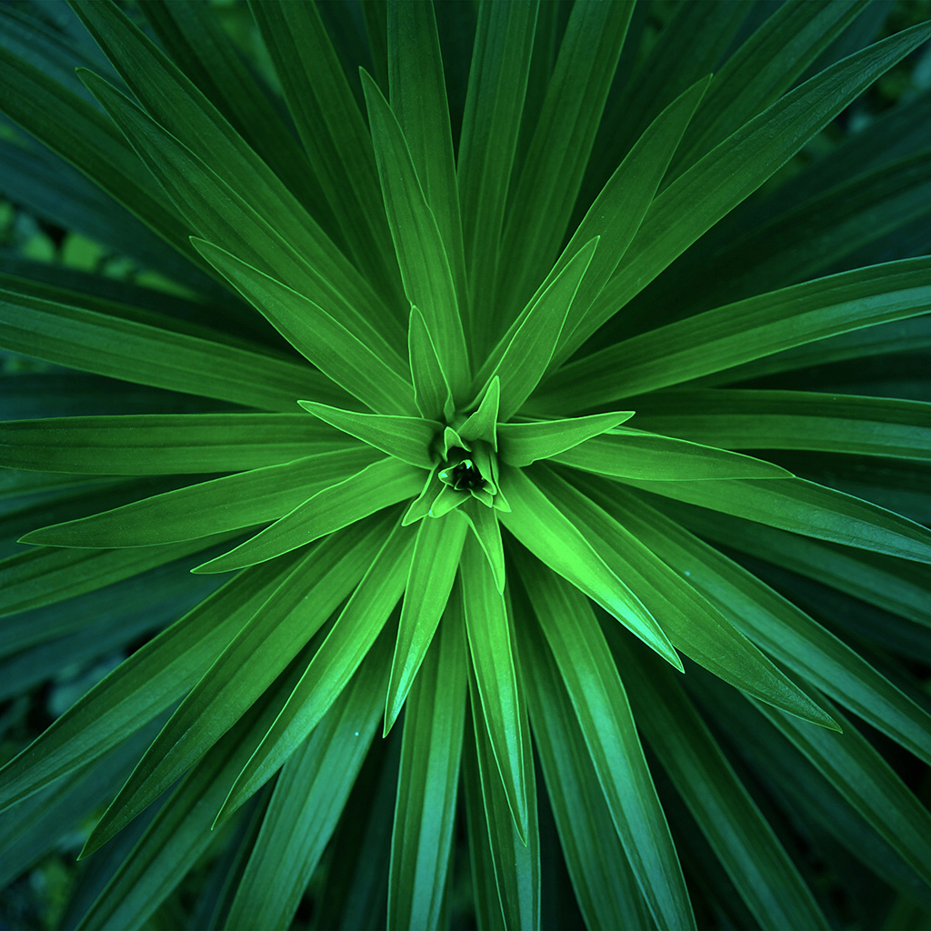android-wallpaper-nh79-leaf-flower-green-line-nature-wallpaper