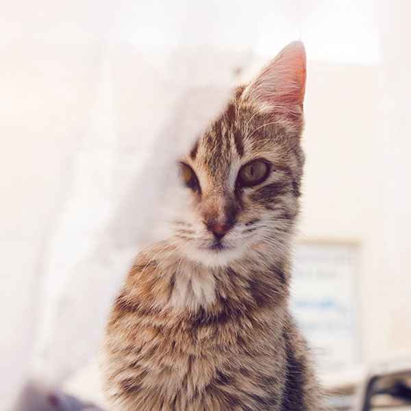 iPapers.co-Apple-iPhone-iPad-Macbook-iMac-wallpaper-nh82-cat-watching-you-eye-animal-cute-morning-kitten-flare-wallpaper