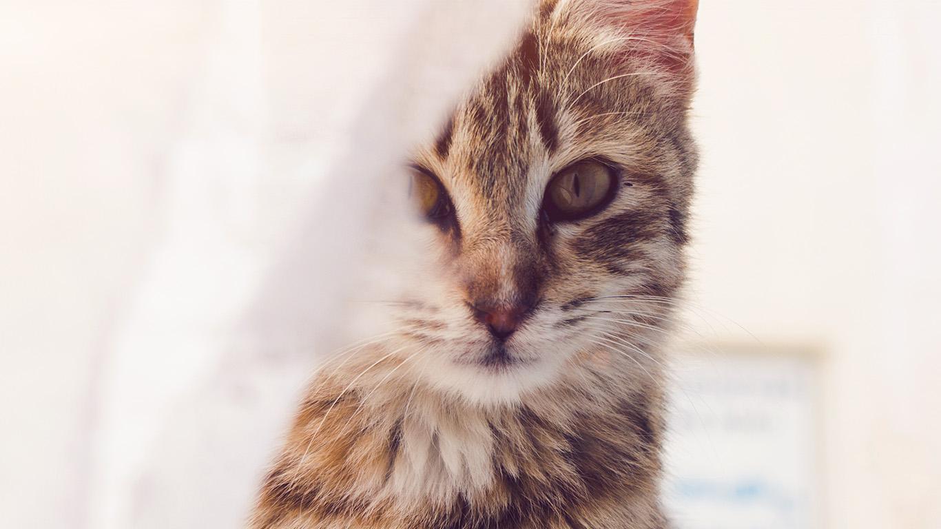 Beautiful Wallpaper Macbook Cat - papers  Perfect Image Reference_949164.jpg