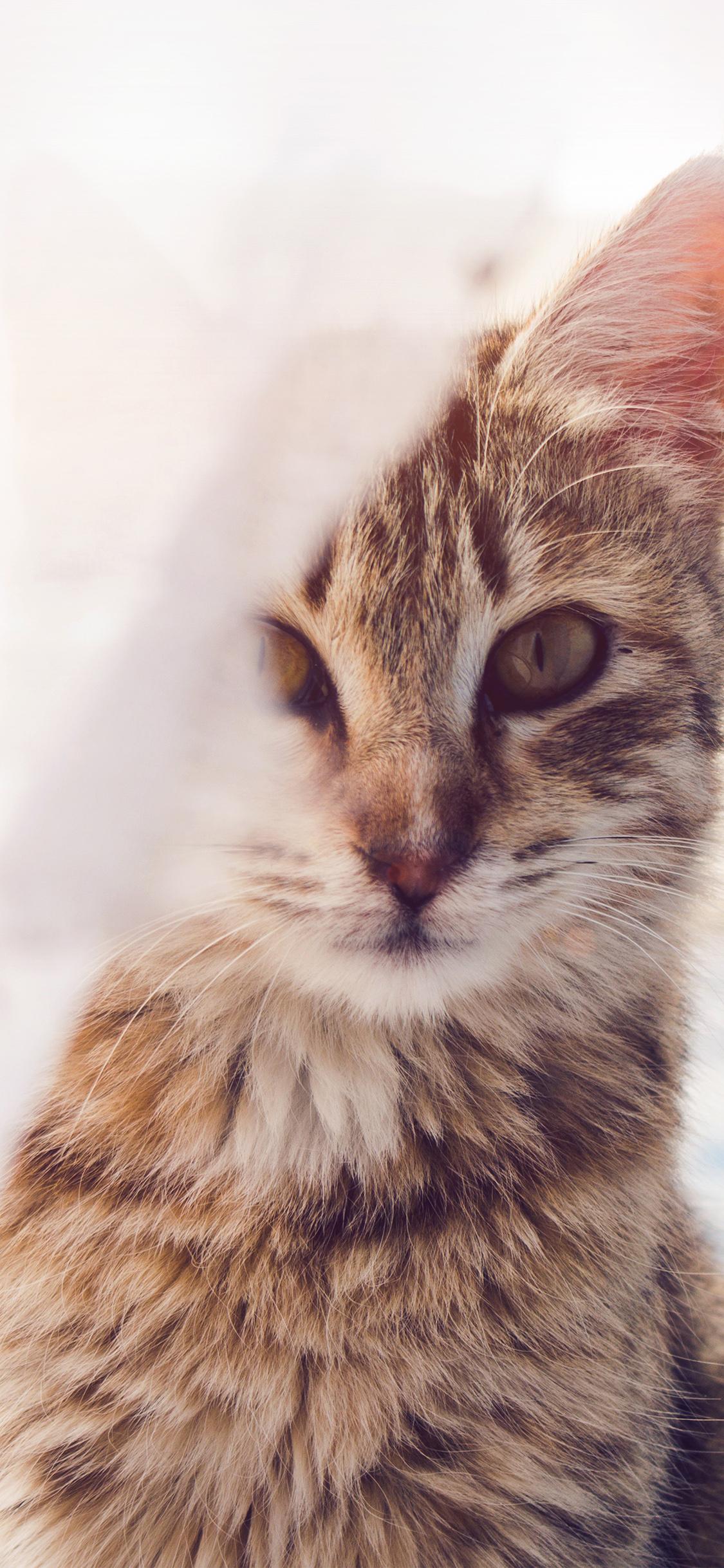 Nh82 Cat Watching You Eye Animal Cute Morning Kitten Flare Wallpaper