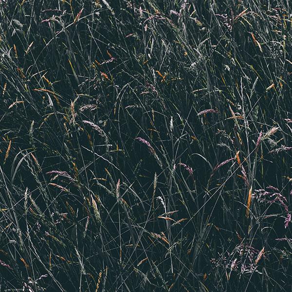 Nh89 Flower Rye Green Dark Nature Wallpaper