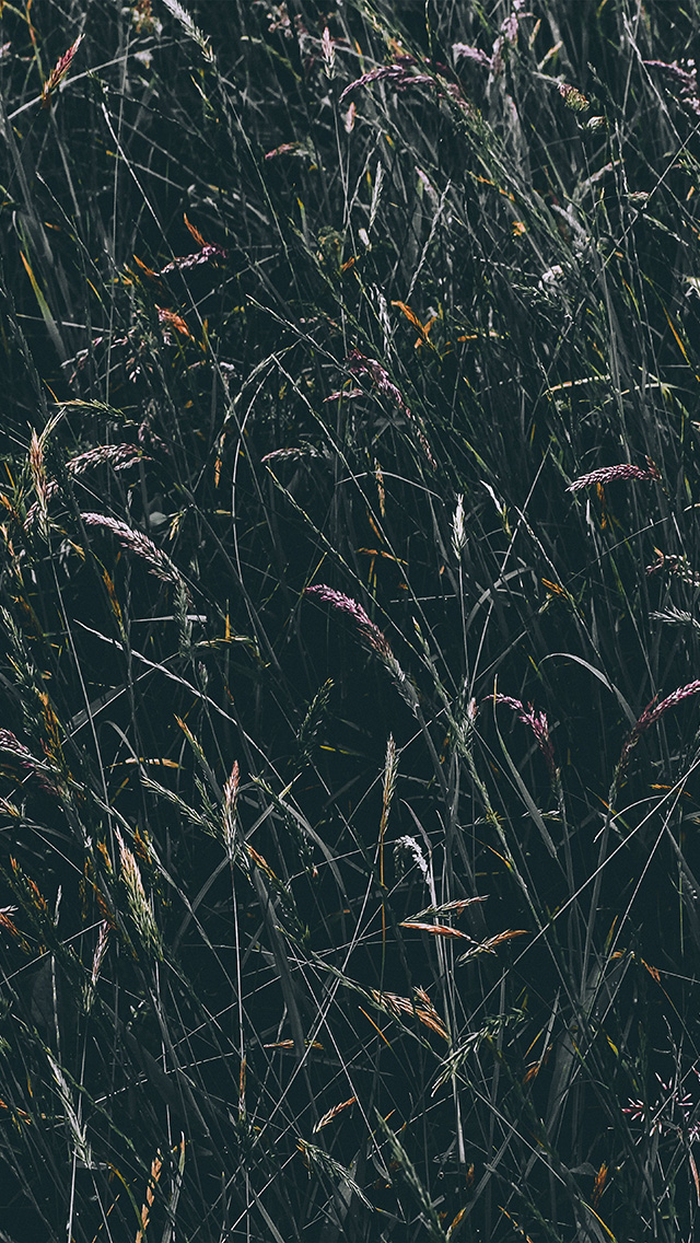 freeios8.com-iphone-4-5-6-plus-ipad-ios8-nh89-flower-rye-green-dark-nature