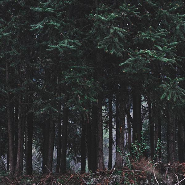 iPapers.co-Apple-iPhone-iPad-Macbook-iMac-wallpaper-nh97-wood-forest-dark-night-tree-nature-wallpaper