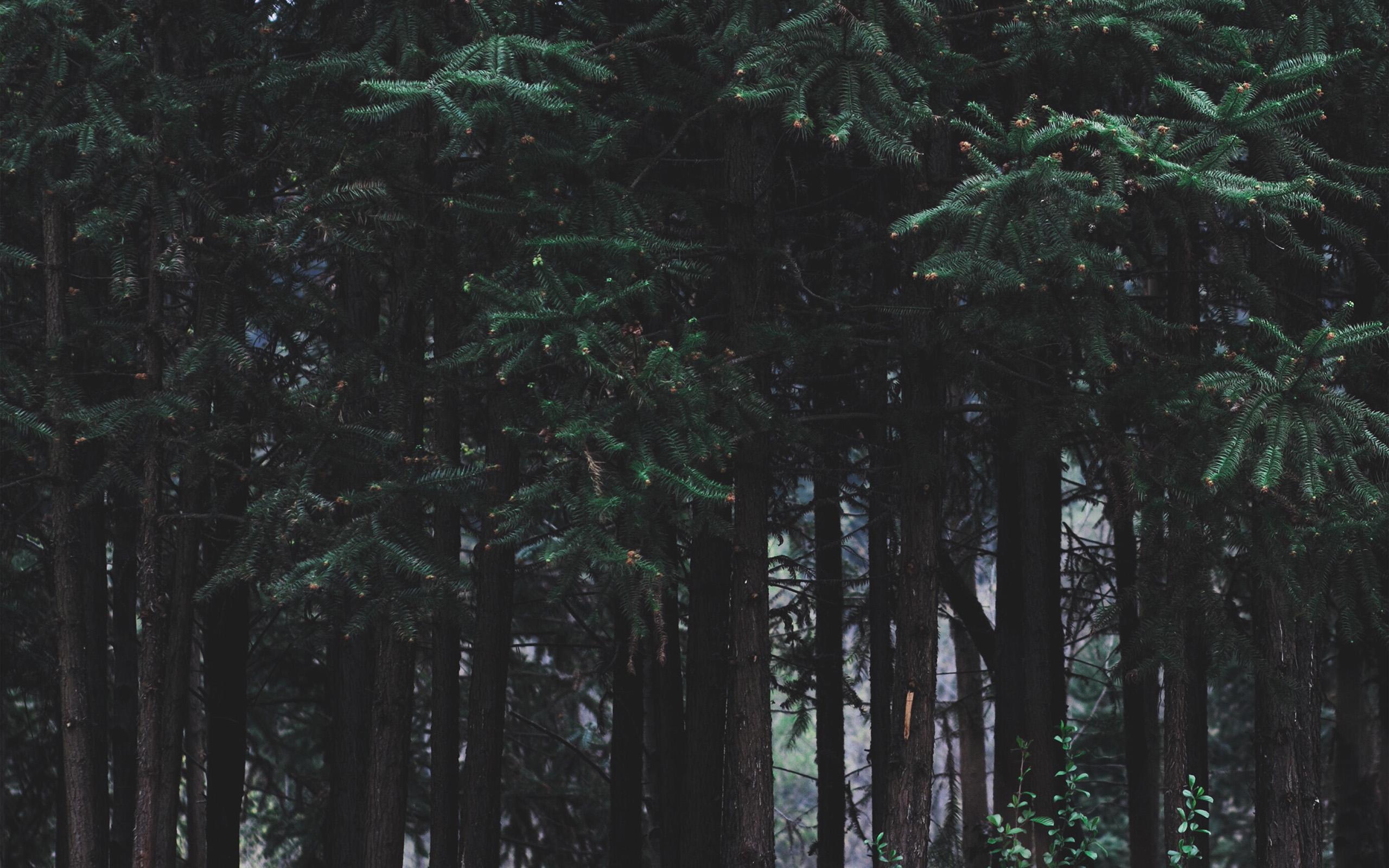 Wonderful Wallpaper Macbook Forest - papers  HD_543225.jpg
