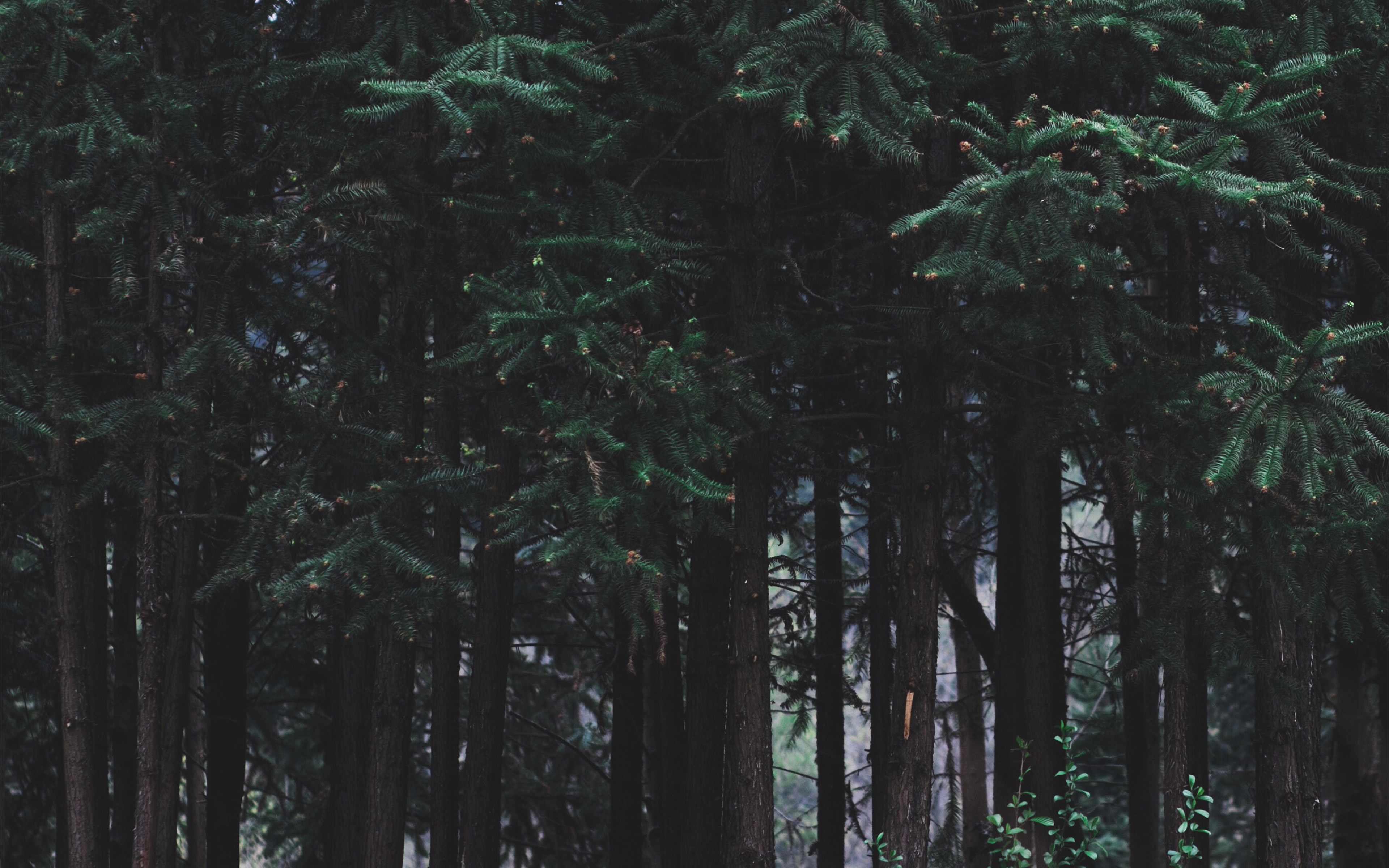 Wallpaper For Desktop Laptop Nh97 Wood Forest Dark Night Tree Nature