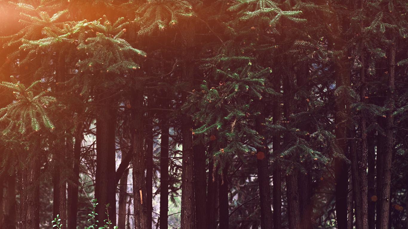 desktop-wallpaper-laptop-mac-macbook-air-nh98-wood-forest-dark-night-tree-nature-flare-wallpaper