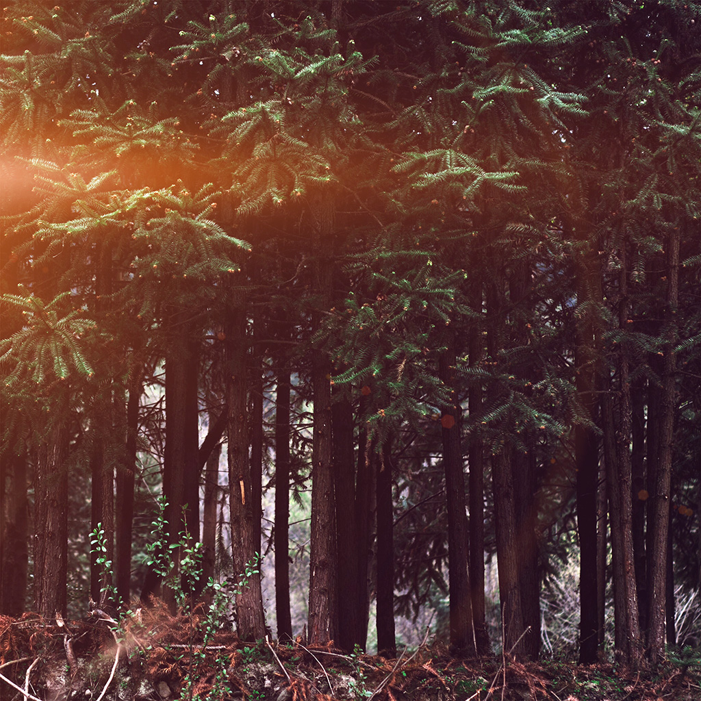 android-wallpaper-nh98-wood-forest-dark-night-tree-nature-flare-wallpaper