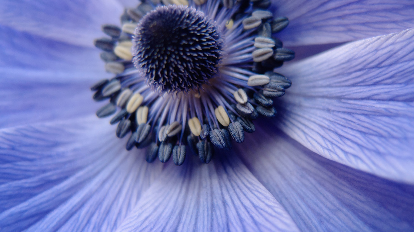 desktop-wallpaper-laptop-mac-macbook-air-ni01-flower-purple-zoom-focus-nature-wallpaper