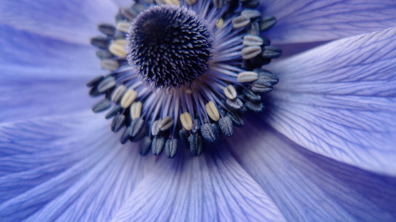 desktop-wallpaper-laptop-mac-macbook-air-ni01-flower-purple-zoom-focus-nature-wallpaper