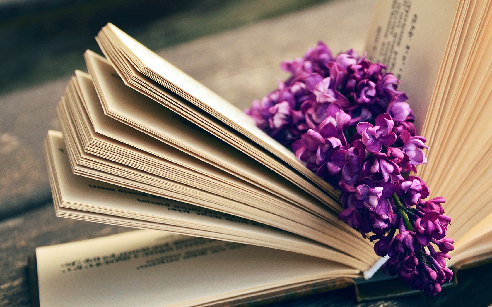 Ni24 Book Read Time Flower Flare Purple Wallpaper