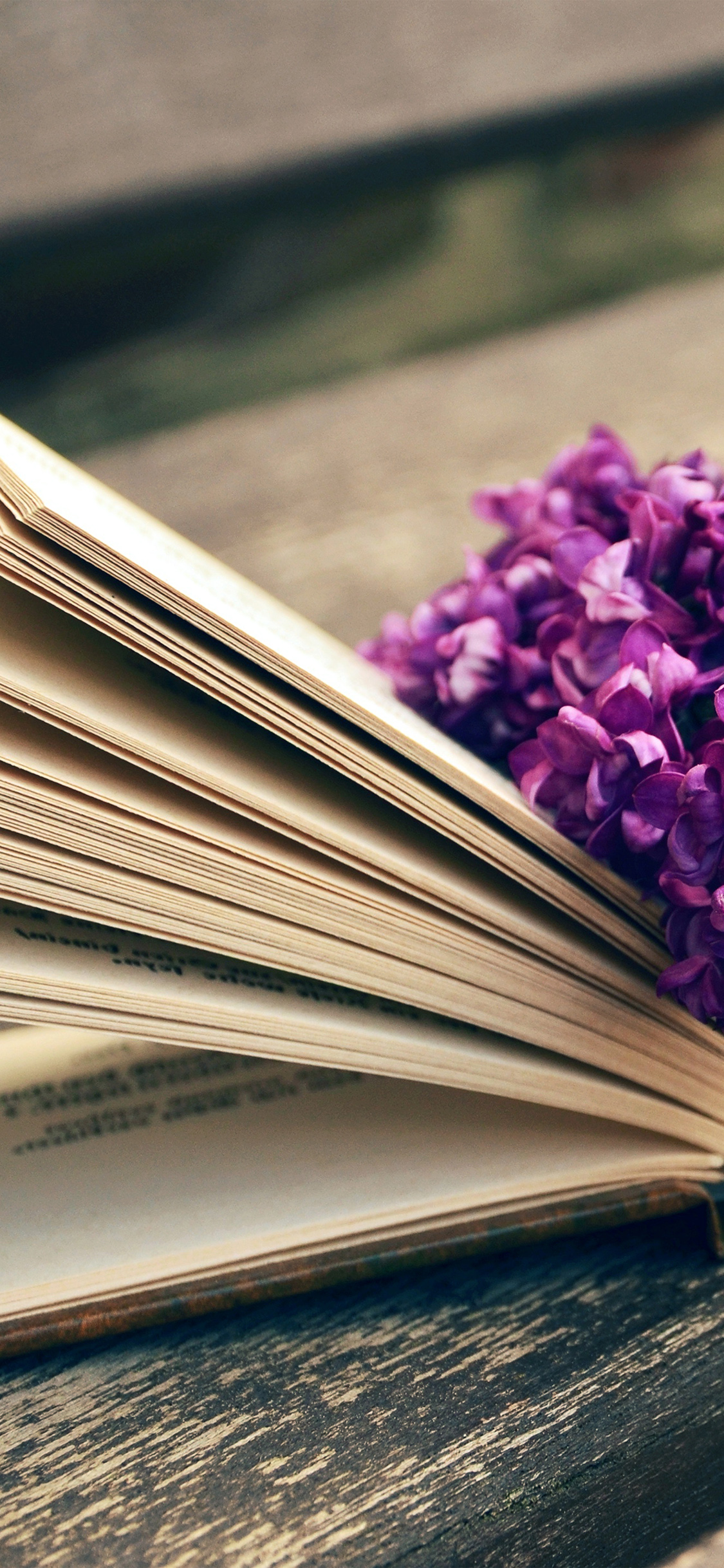 iPhoneXpapers.com-Apple-iPhone-wallpaper-ni24-book-read-time-flower-flare-purple
