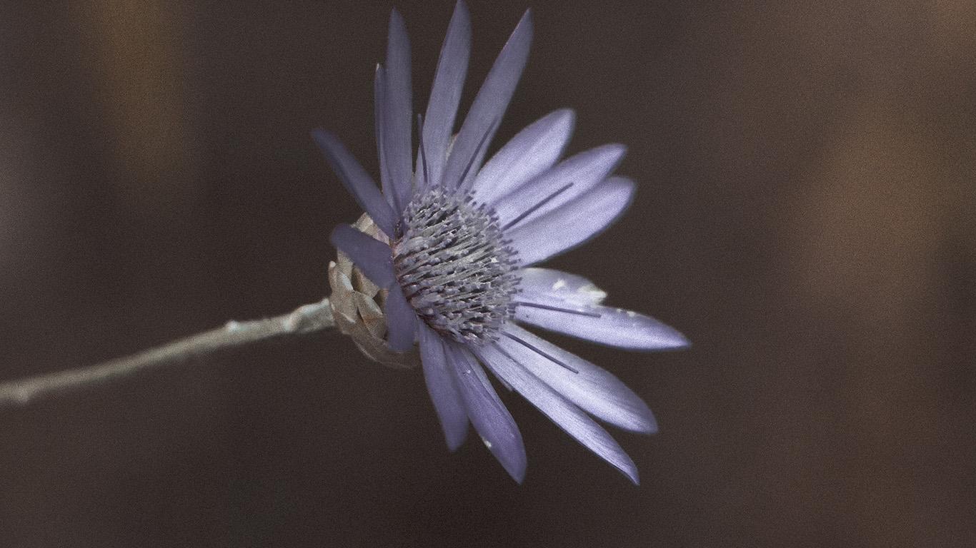 desktop-wallpaper-laptop-mac-macbook-air-ni45-flower-awesome-gorgeous-magnificent-dark-purple-wallpaper