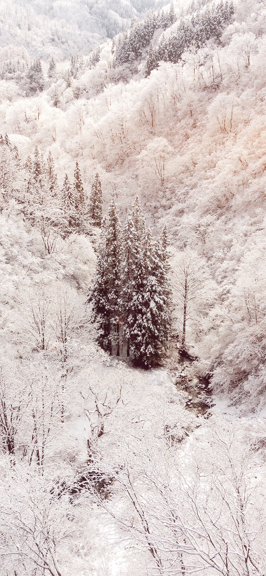 iPhonexpapers.com-Apple-iPhone-wallpaper-ni67-winter-white-snow-wood-forest-mountain-flare