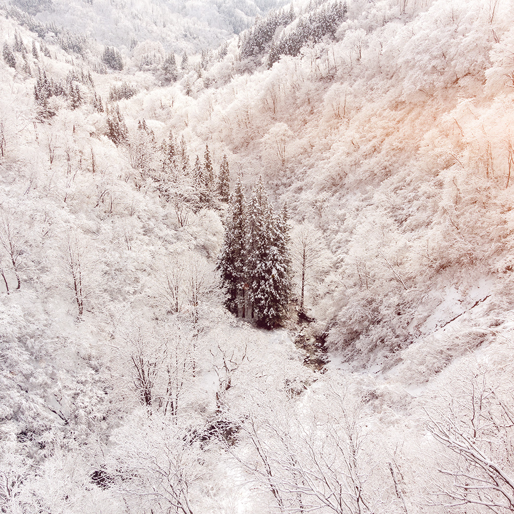 wallpaper-ni67-winter-white-snow-wood-forest-mountain-flare-wallpaper