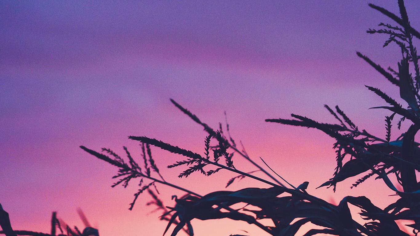 desktop-wallpaper-laptop-mac-macbook-air-ni69-sunset-field-forest-grass-flower-beautiful-wallpaper