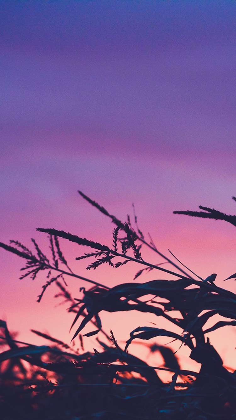 iPhone6papers.co-Apple-iPhone-6-iphone6-plus-wallpaper-ni69-sunset-field-forest-grass-flower-beautiful