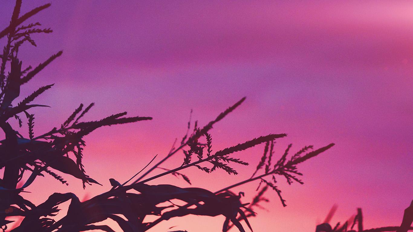 desktop-wallpaper-laptop-mac-macbook-air-ni70-sunset-field-forest-grass-flower-beautiful-pink-wallpaper