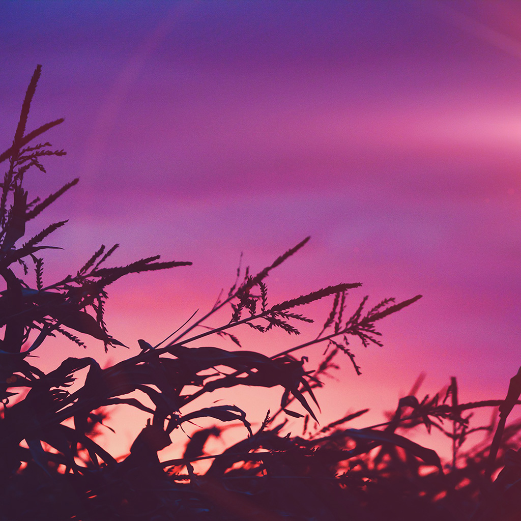 android-wallpaper-ni70-sunset-field-forest-grass-flower-beautiful-pink-wallpaper