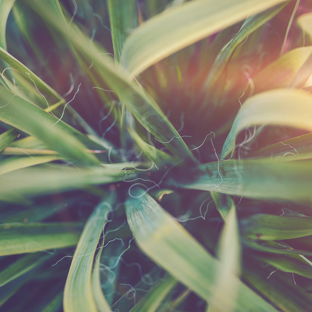 android-wallpaper-ni80-garden-leaf-flower-green-bokeh-nature-flare-wallpaper