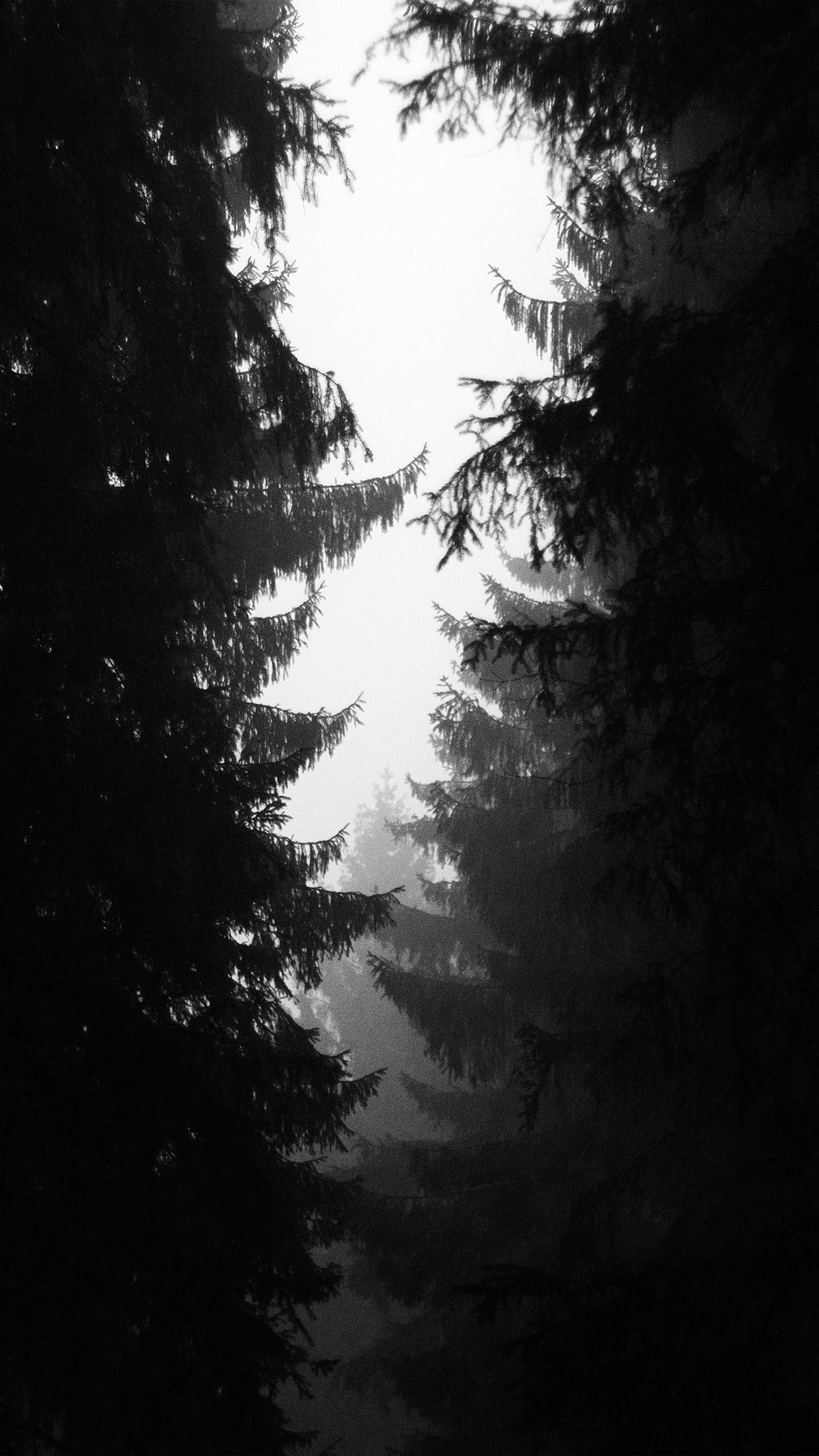 ni90-wood-tree-simple-nature-bw-dark-wallpaper