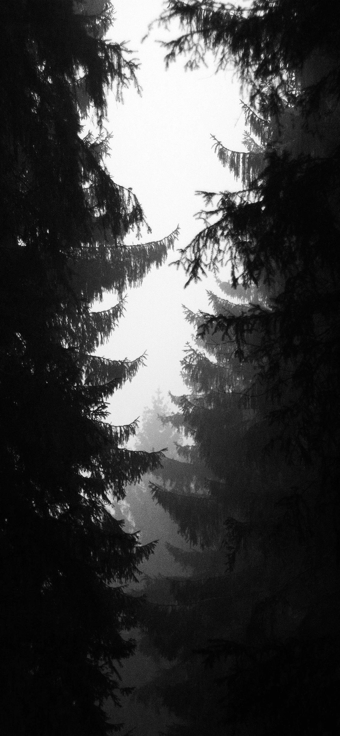 iPhoneXpapers.com-Apple-iPhone-wallpaper-ni90-wood-tree-simple-nature-bw-dark