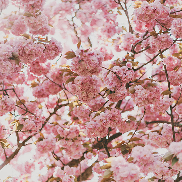 iPapers.co-Apple-iPhone-iPad-Macbook-iMac-wallpaper-ni91-spring-flower-pink-blossom-bokeh-nature-wallpaper