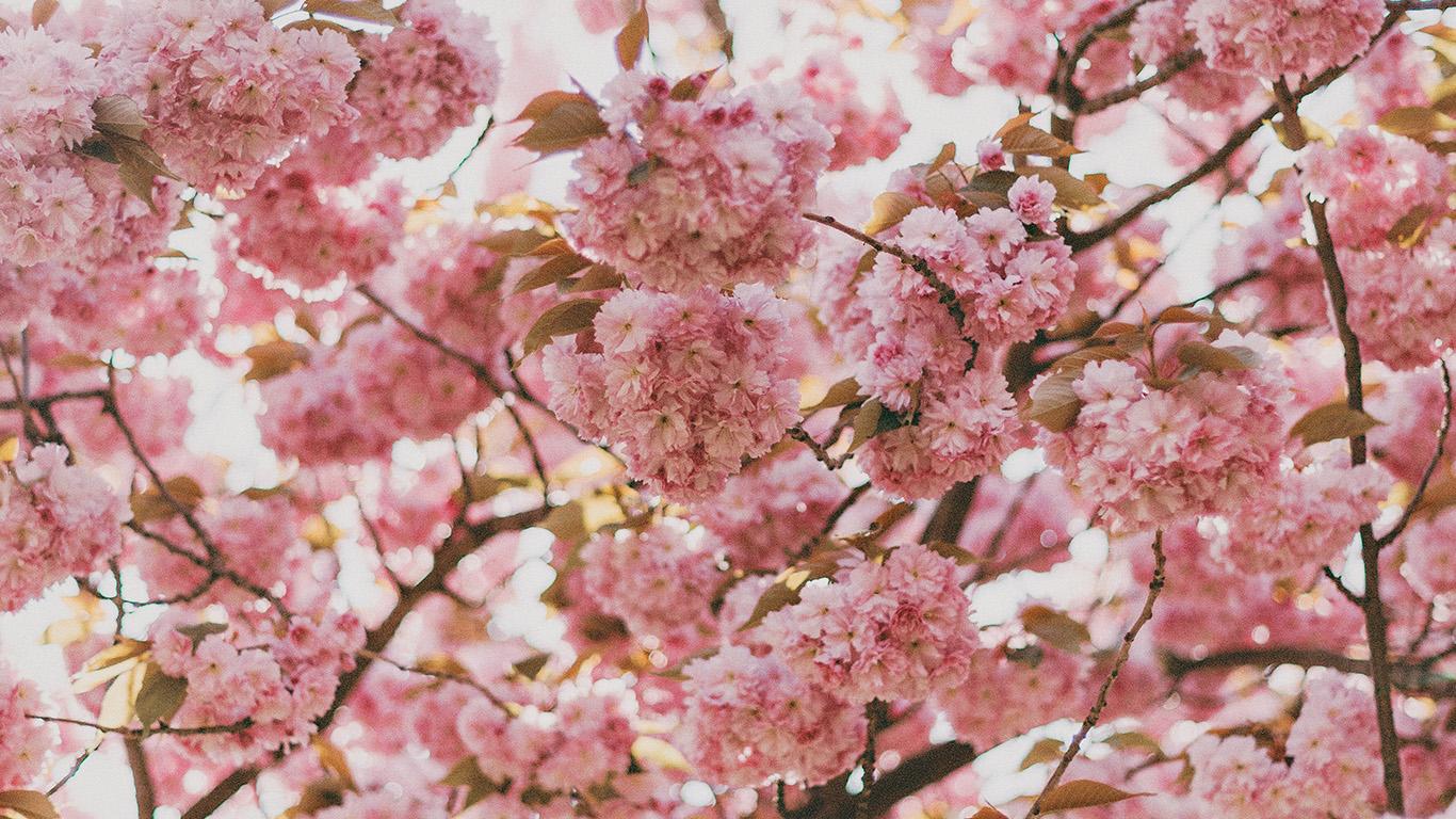 desktop-wallpaper-laptop-mac-macbook-air-ni91-spring-flower-pink-blossom-bokeh-nature-wallpaper