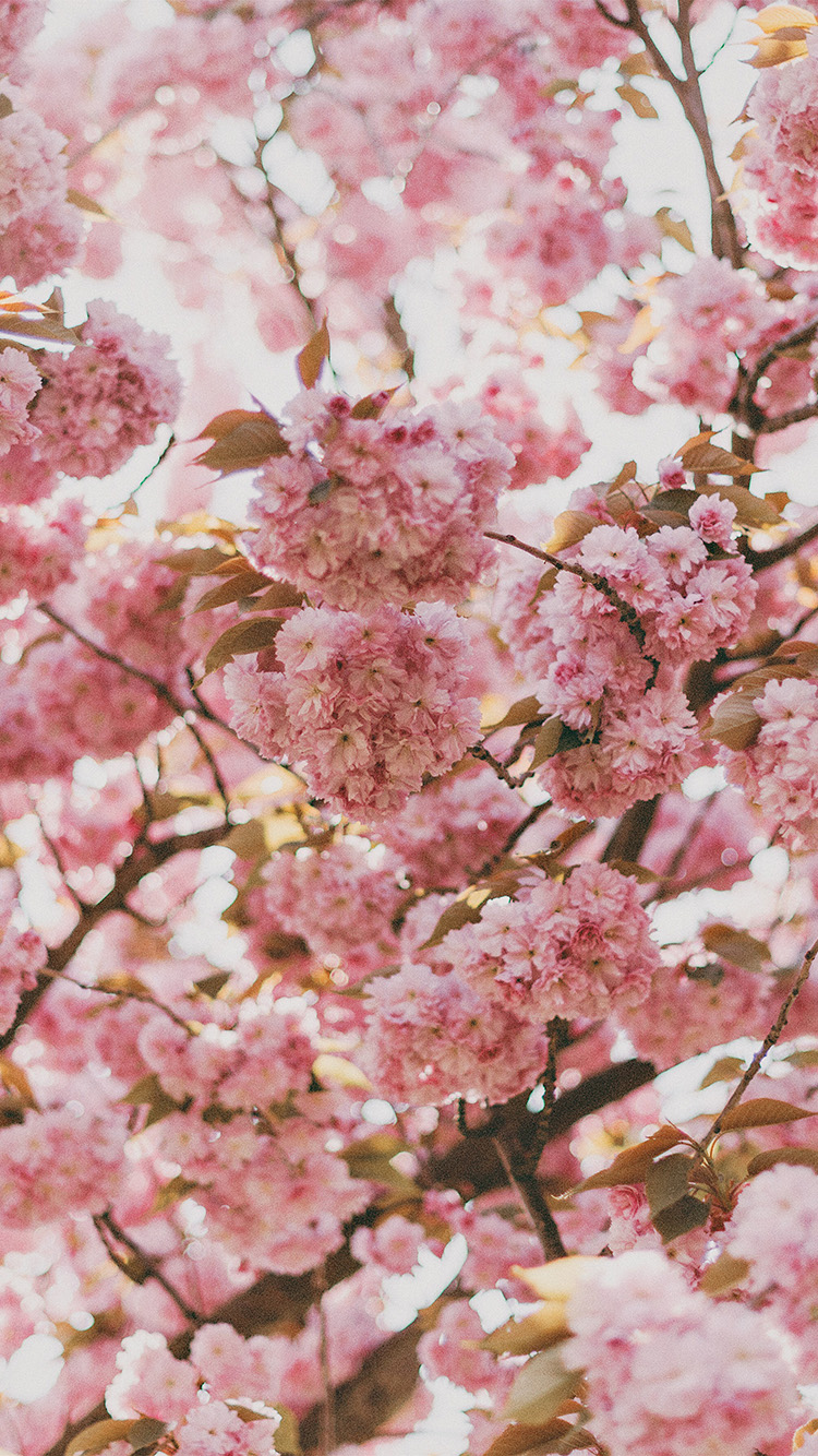 iPhone6papers.co-Apple-iPhone-6-iphone6-plus-wallpaper-ni91-spring-flower-pink-blossom-bokeh-nature