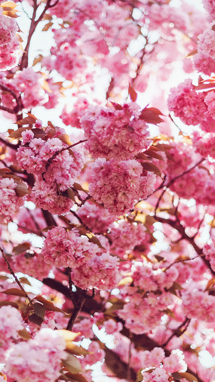 iPhone6papers.co-Apple-iPhone-6-iphone6-plus-wallpaper-ni92-spring-flower-pink-blossom-bokeh-nature-flare