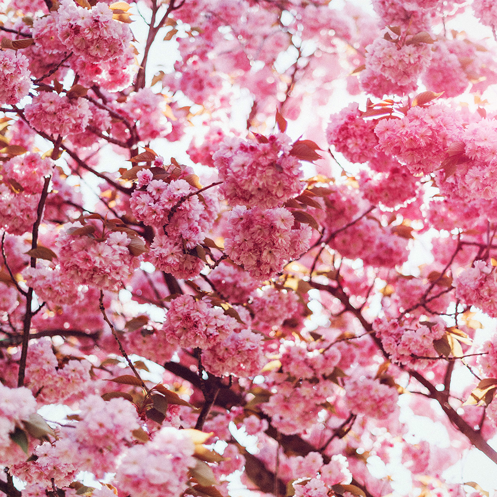 wallpaper-ni92-spring-flower-pink-blossom-bokeh-nature-flare-wallpaper