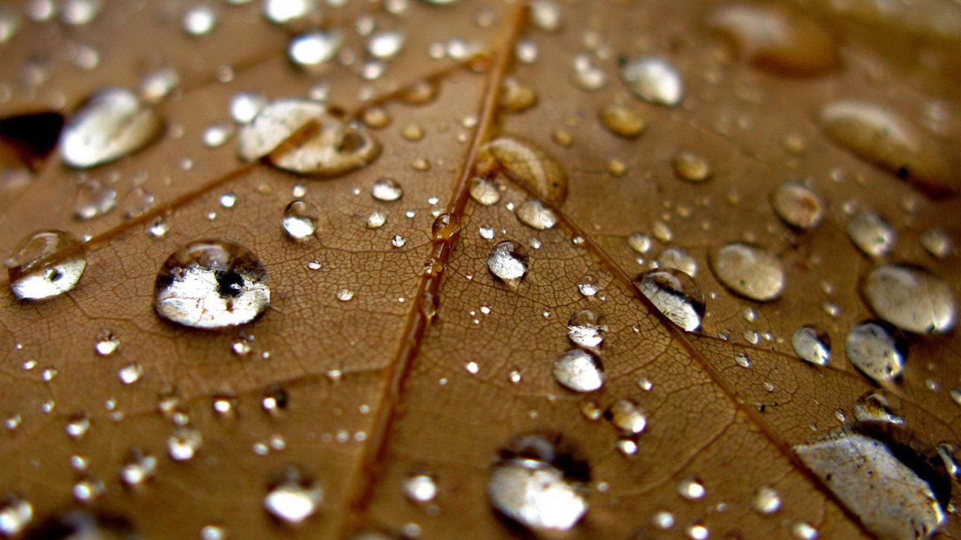 desktop-wallpaper-laptop-mac-macbook-air-nj07-leaf-rain-water-drop-bokeh-nature-wallpaper