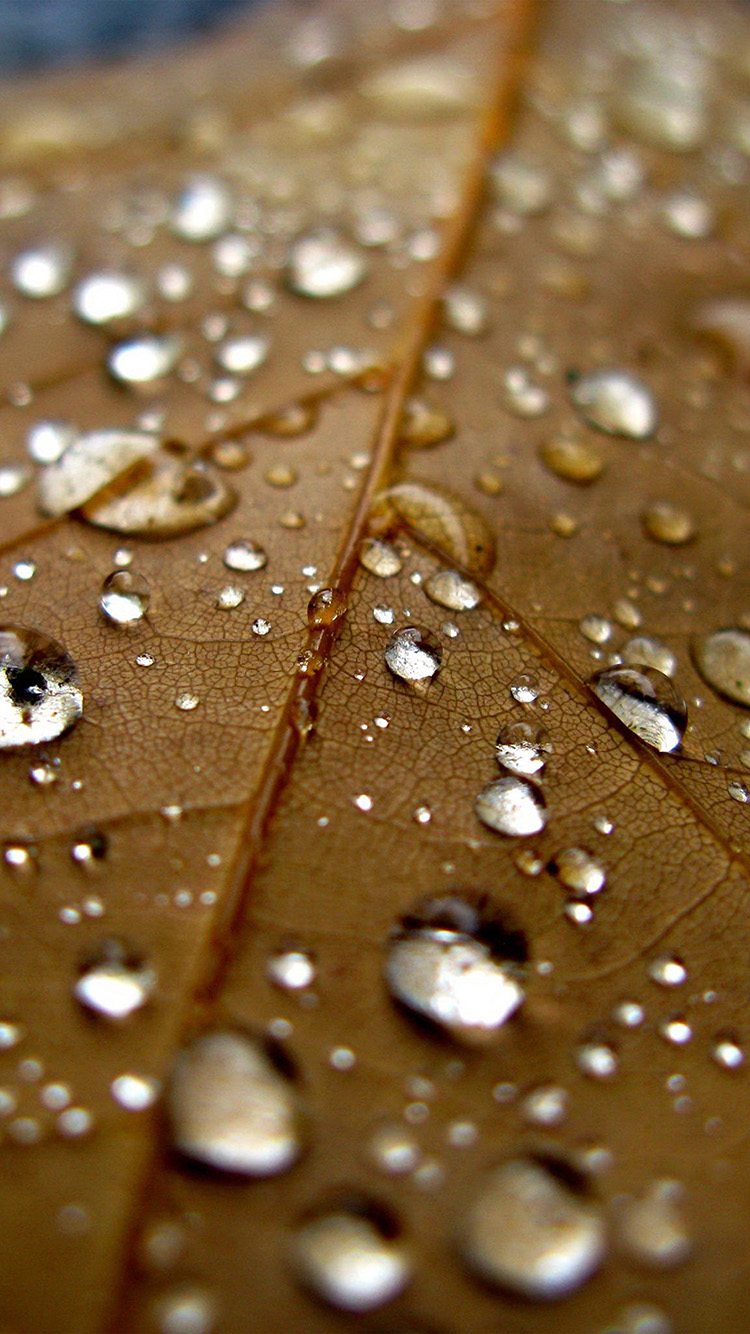 iPhone6papers.co-Apple-iPhone-6-iphone6-plus-wallpaper-nj07-leaf-rain-water-drop-bokeh-nature