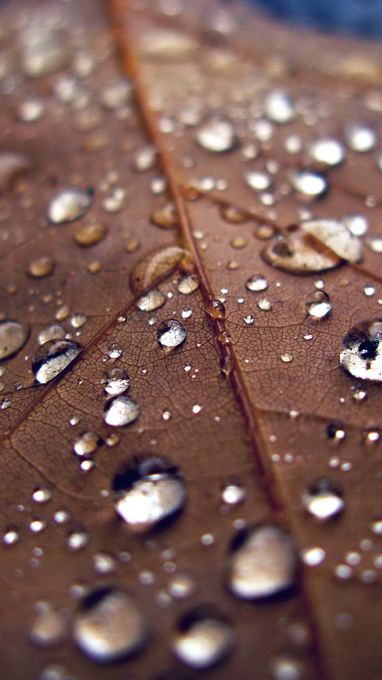 iPhonepapers.com-Apple-iPhone-wallpaper-nj08-leaf-rain-water-drop-bokeh-nature-blue